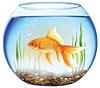 Цены на аквариумы в Киеве