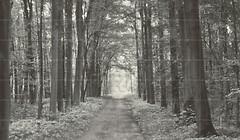 Фото Tubadzin декор-панно All in White 1 209.8x359.8 (комплект 42 шт)