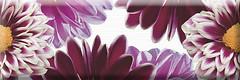 Фото Absolut Keramika декор Flower Decor 1 15x45