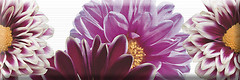 Фото Absolut Keramika декор Flower Decor 2 15x45