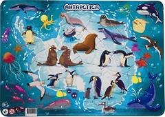 Фото DoDo Антарктика (R300176)