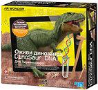 Фото 4M AR Wonder Тираннозавр ДНК динозавра (00-07002)
